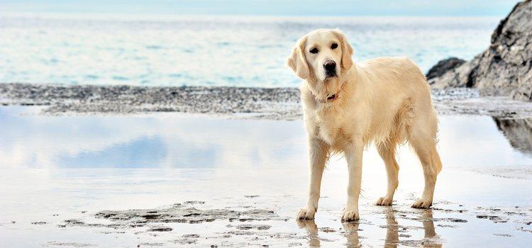 La playa es un destino ideal para pasar las navidades alejados del frío