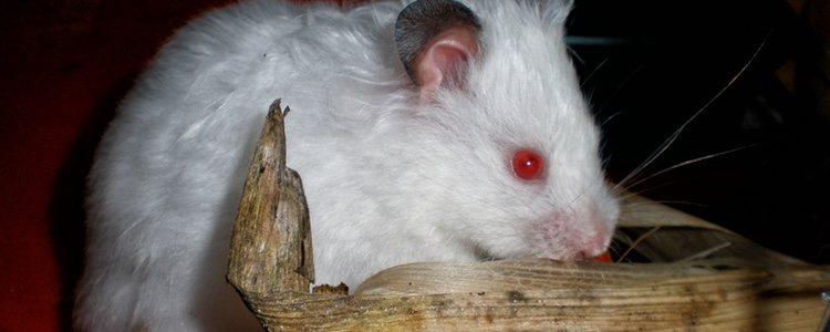 Esta animal tiene un comportamiento bastante nocturno por naturaleza
