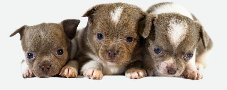 Debes de pensar que raza de perro se adapta mejor a tu familia