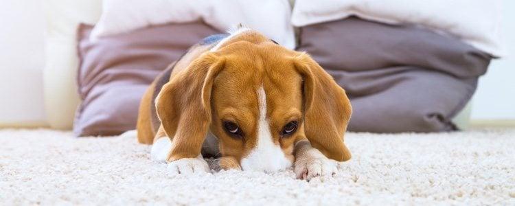 Debéis pensar en las características del perro que se asemeje más a vosotros