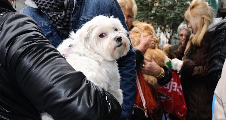 La gente acude con sus mascotas a hacer cola a la Iglesia de San Antón