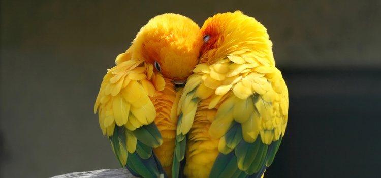 Nuestros pájaros no pueden criar en cualquier sitio