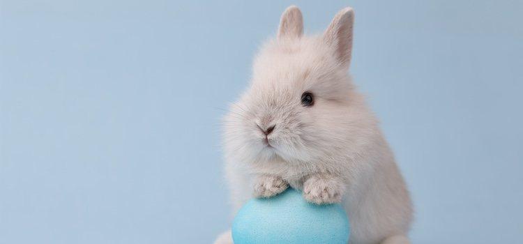 Si tu conejo convive con otros conejos, una vez aplicada la solución deberás aislarlo