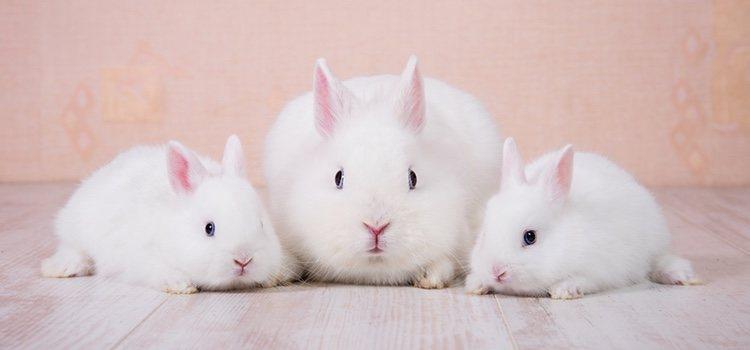 Hay que tener cuidado con algunas sustancias que podrán ser nocivas para el conejo