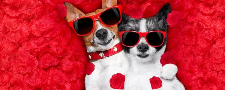 Puedes aprovechar ese día tan especial para pasear con tu perro y jugar juntos