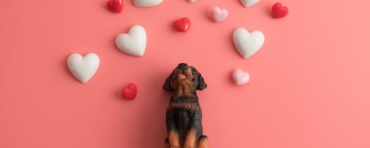 Que tu mascota se sienta querida es muy importante