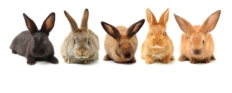 Все породы кроликов должны придерживаться сбалансированной диеты.