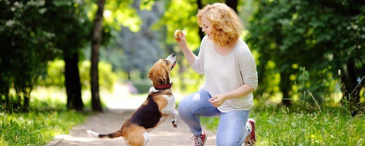 Para un correcto adiestramiento se utilizará el refuerzo positivo del animal