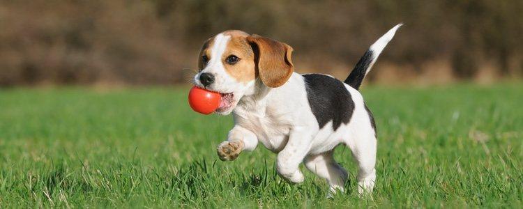 Es bueno que primero se anime mucho al perro y jugar con él
