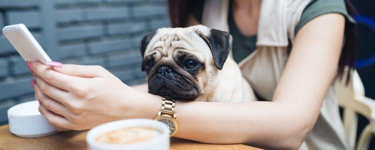 Hay muchos bares y restaurantes especiales para mascotas