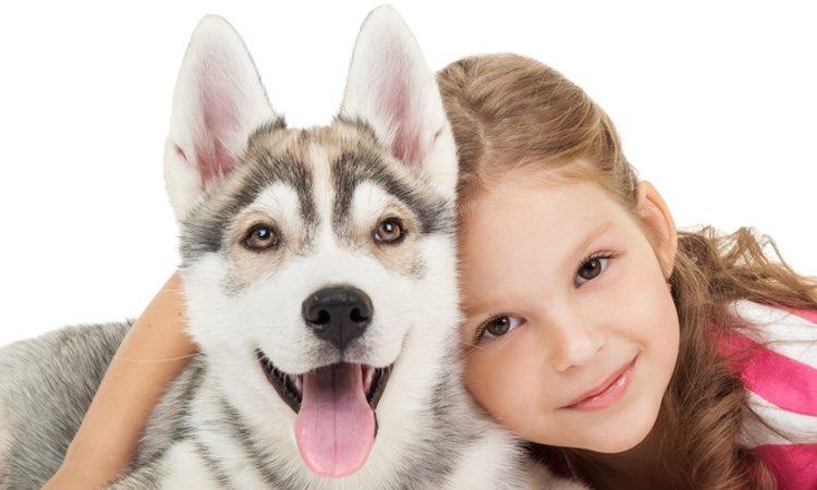 Los Huskies son perros que cuidan bien de los niños