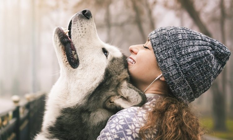 Alaskan Malamute y chica