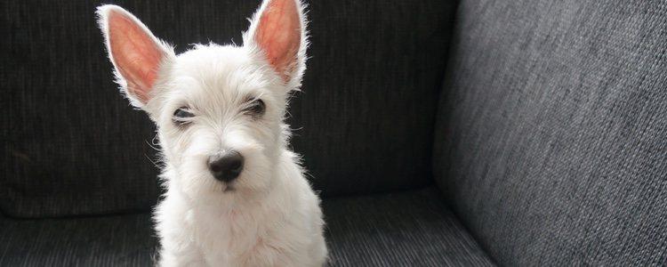 Los perros ya cuentan con su propio museo que todo el mundo puede visitar