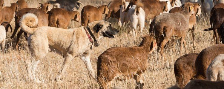 Tradicionalmente utilizado para guardar el ganado