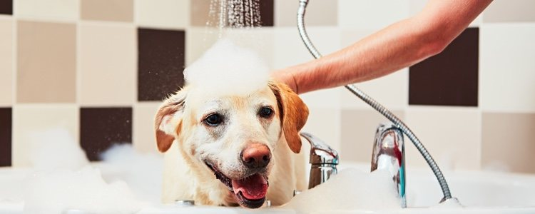 Es necesario mantener una buena higiene en nuestra mascota