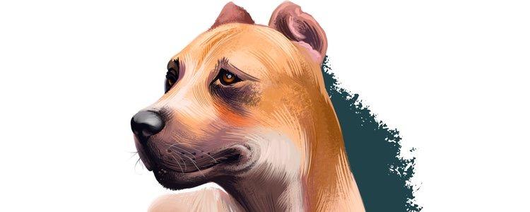 Ilustración de un dogo español