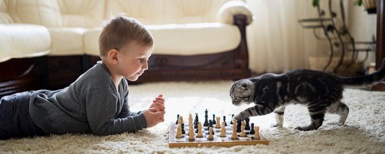 Aunque los gatos tienen fama de ariscos, son perfectos para hacer compañía a tus hijos