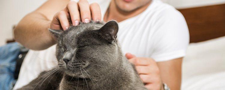 Los gatos deben ser independientes pero no ariscos