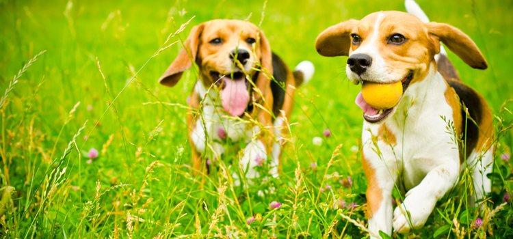Hay que tener en cuenta que la raza del perro condiciona su personalidad