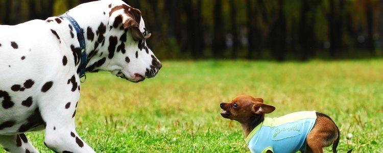 Tanto cachorros como adultos tienen sus ventajas y desventajas