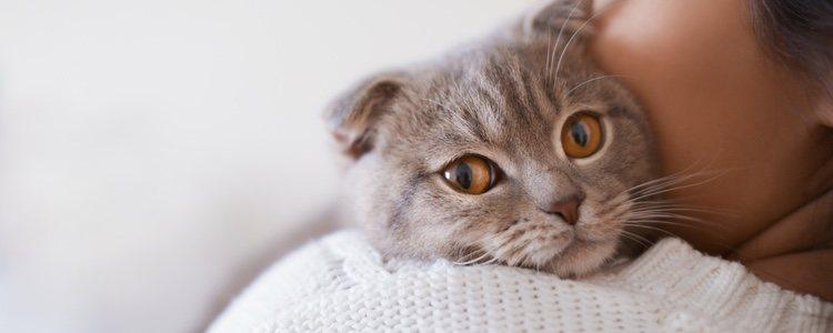 Prevenir estas enfermedades es bueno tanto para la mascota como para el dueño