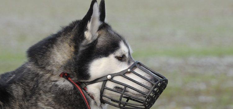 Perro con bozal