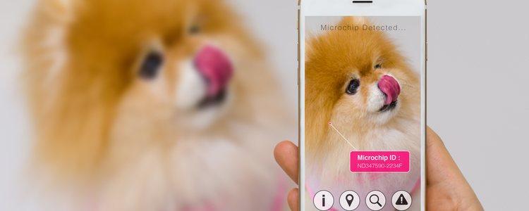 Es importante registrar a nuestra mascota en la aplicación para poder encontrarla