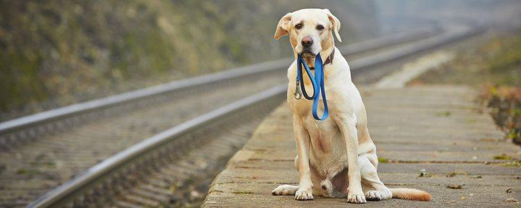 La aplicación también ayuda a disminuir el abandono de animales