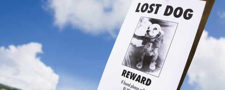 Las nuevas tecnologías han sustituido a los antiguas formas de buscar mascotas perdidas
