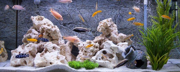 El mantenimiento del acuario es fundamental para una correcta salud de nuestro pez