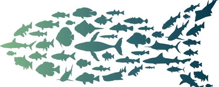 Es importante separar el pez con la enfermedad de vejiga natatoria del resto
