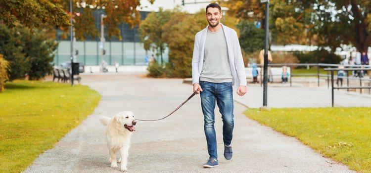 Lo más importante es que enseñes a tu perro a pasear junto a ti