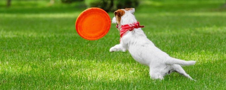 Utiliza elementos como una pelota o un frisbee para jugar con tu perro