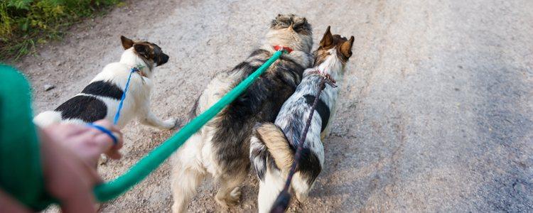 Si no tienes tiempo de sacar a tu mascota a pasear hay gente que se dedica a ello