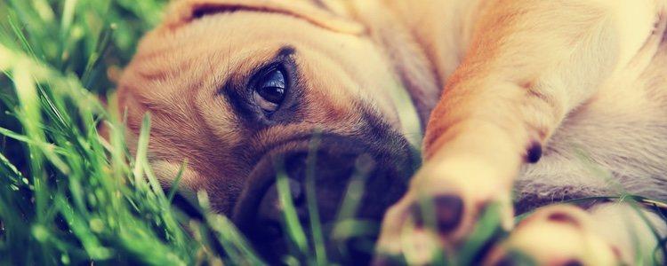 Al tener un perro es importante tener claro cual es su alimentación adecuada