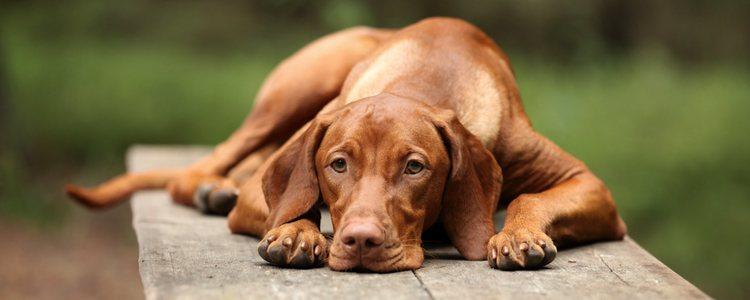 No prestar atención a estas mascotas pueden hacer que caigan en depresión