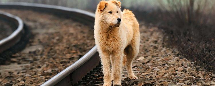 El abandono animal es uno de los asuntos más reclamados por personas y asociaciones