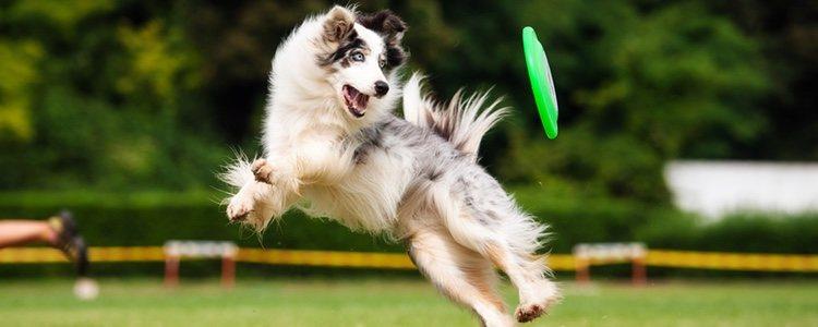 Los paseos cortos no proporcionan la actividad física necesaria para tu perro