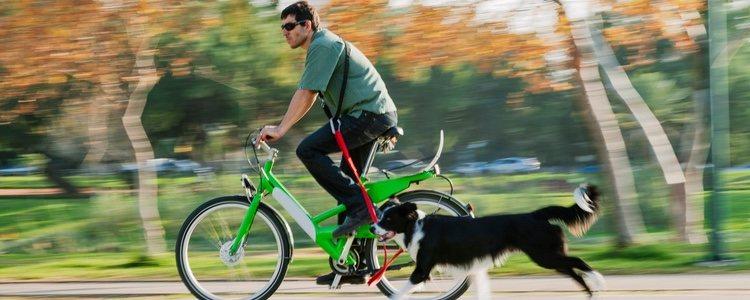 Para pasear en bici con tu perro es fundamental que se obediente y esté educado