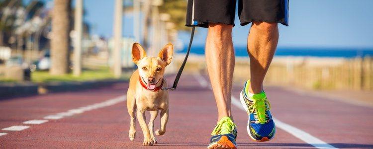 El Canicross consiste en correr junto a tu perro con correa