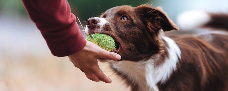 El ejercicio físico es una buena forma de hacer más fuerte tu unión con el perro
