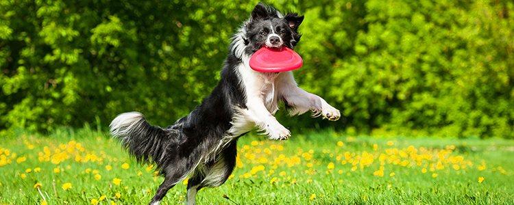 Un perro que realiza ejercicio es mucho más social