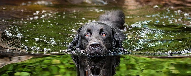 Nadar también es un buen ejercicio para tu mascota