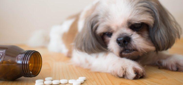 Perro con medicación