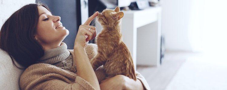 Los gatos sordos deberán de tener más atenciones
