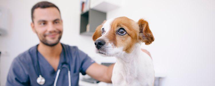 Hay que estar atentos por si se produce una intolerancia y acudir al veterinario