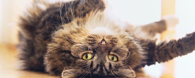 Una buena hidratación es buena para la salud y el aspecto de tu gato