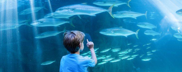 Para aumentar la vida de los peces en cautividad se reproduce su habitat natural
