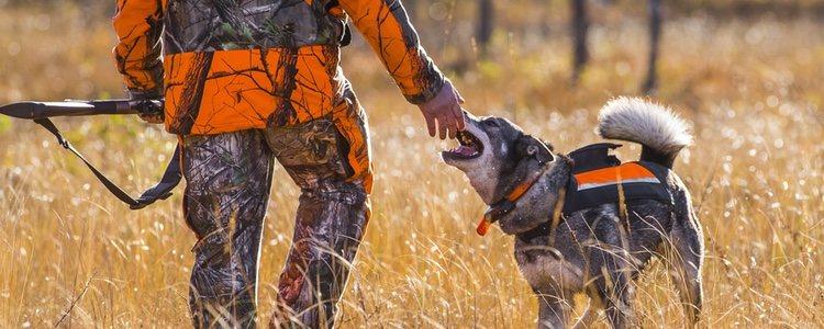 El elkhound ha acompañado a los cazadores polares durante más de un milenio