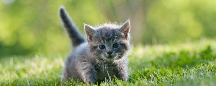 Los gatos que disfrutan al aire libre están más predispuestos a tener parásitos intestinales